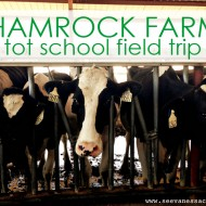 (tot school tuesday) shamrock farms field trip