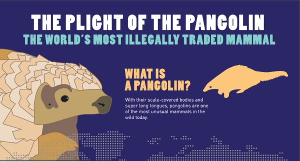 Information-about-the-Pangolin