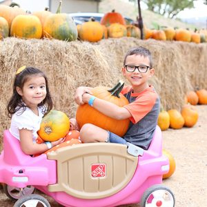 Fall Things To Do in Phoenix Arizona