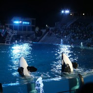 Travel: 10 Tips for Sea World San Diego with Kids