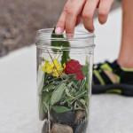 Kid Friendly: Nature Walk Terrarium