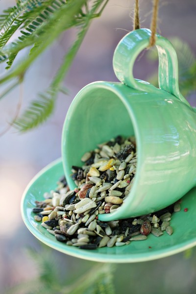 DIY Teacup Bird Feeder Craft Project for Kids
