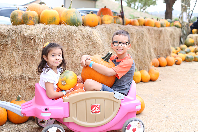 fall-activities-and-things-to-do-in-phoenix-arizona-2