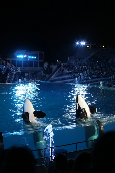 Tips for Parents for Sea World San Diego with Kids