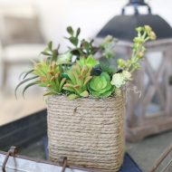Upcycled Kleenex Tissue Box Succulent Planter and Craft Caddy